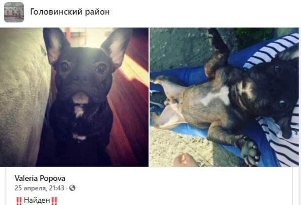 Пес с Онежской вернулся домой благодаря соцсетям
