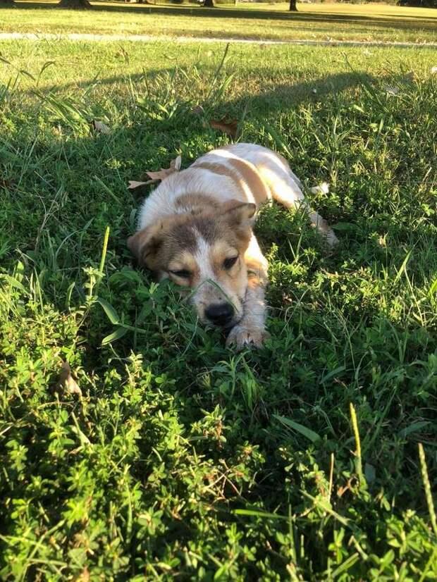 Прохожие заметили в траве посреди парка мохнатый комочек  история, история спасения, собака, собаки, спасение животных, трогательно