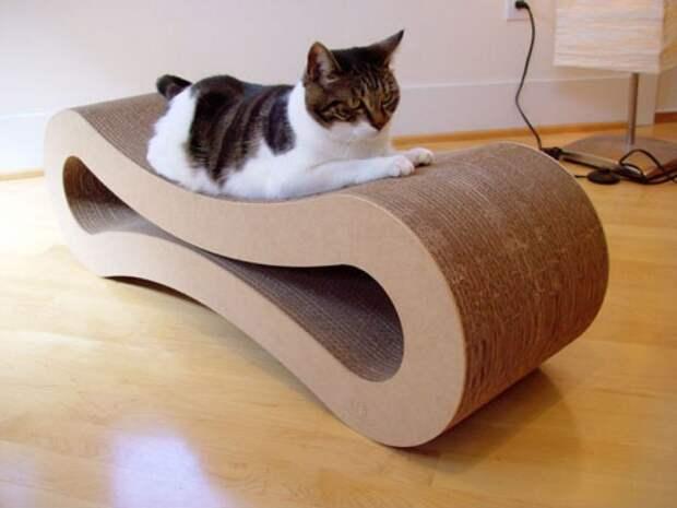 cathouse21 Дизайн для котов