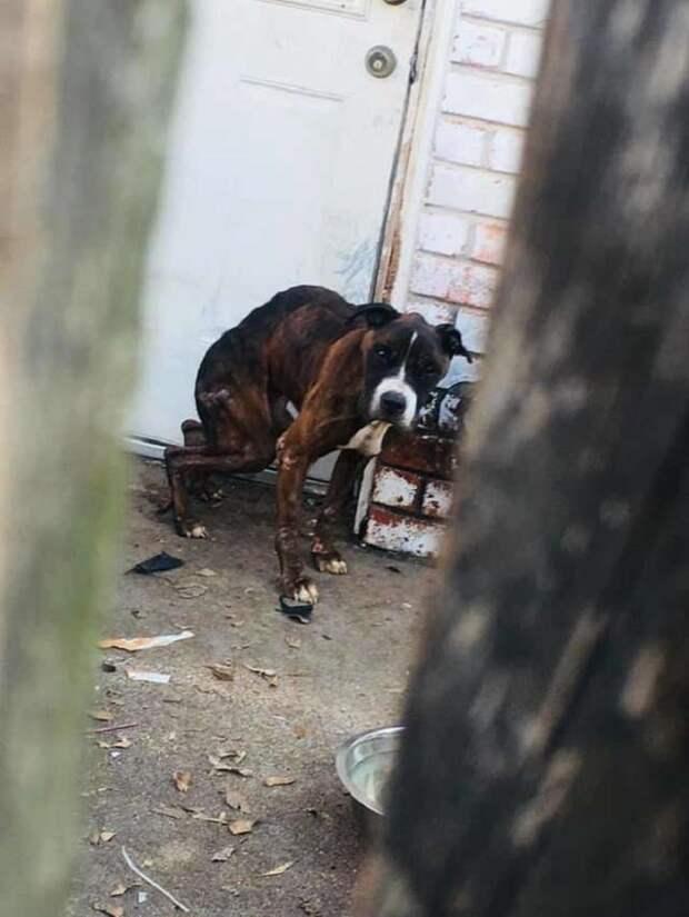 Исхудавшая собака