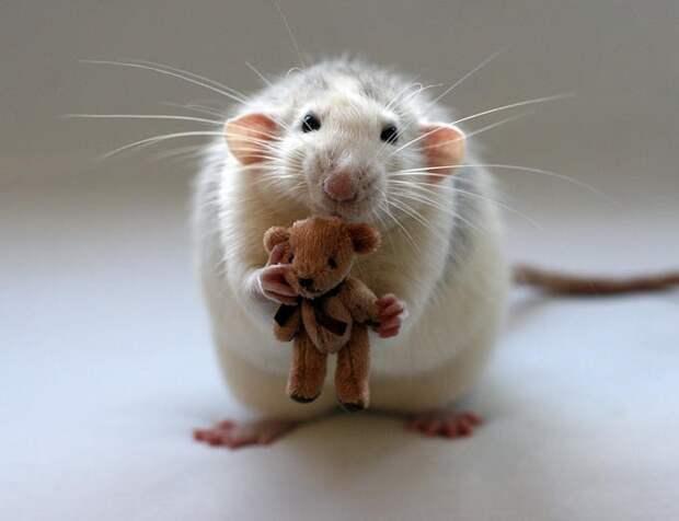 Мышки - малышки от Ellen Deden