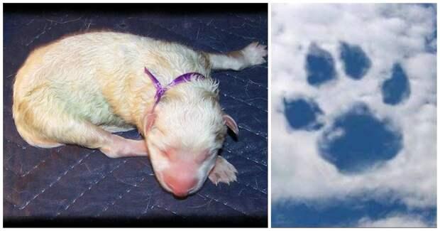 «Он появился в будке ниоткуда!» Белый щенок с заячьей губой: история для души