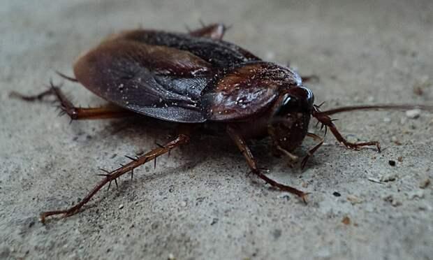 Жительница Октябрьской заметила «закладчика тараканов»