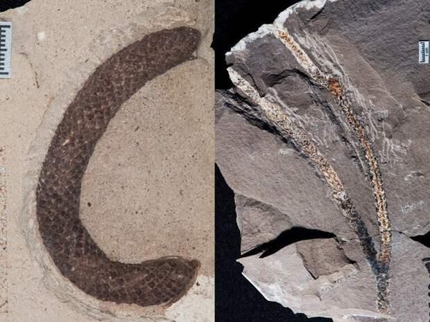 Находки палеогенового периода подсказали, где была родина араукарий