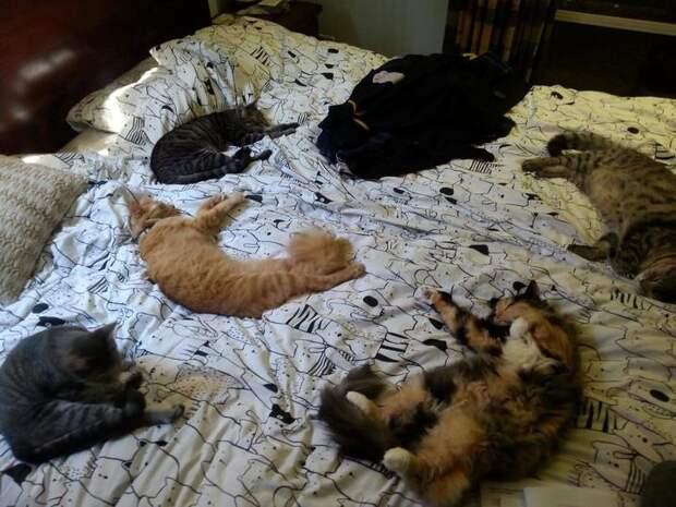 Человек, подвинься! Смотрите, как коты исобаки нагло отвоевывают кровати ухозяев