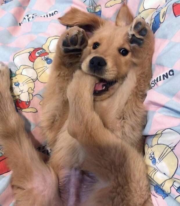 20 уморительно смешных животных, которые делают что-то не так, как все кошка, подборка, смешные животные, собака, топ, юмор