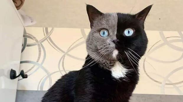 У этого кота родилось 2 котенка. Угадайте, как они выглядят