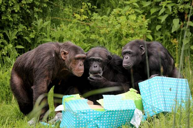 zivotnye za mai 2014 1 ned 23 Лучшие фотографии животных со всего мира за неделю