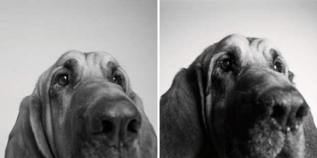 Трогательный фотопроект: Как взрослеют собаки