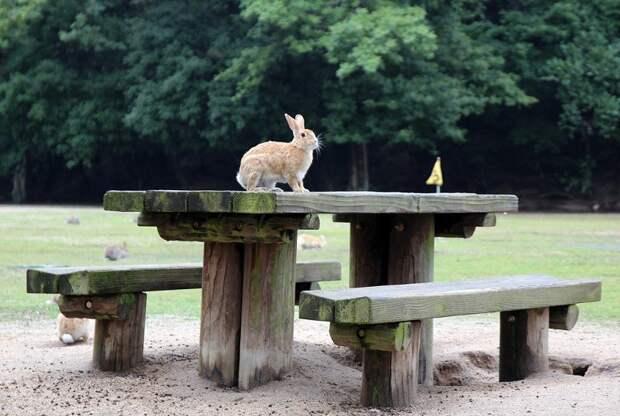 Вот он, кроличий рай в Японии