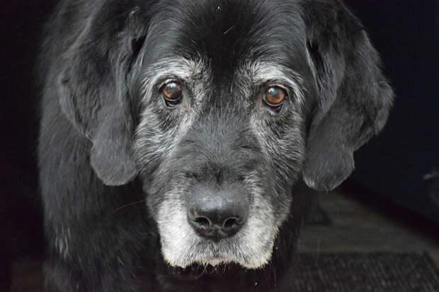 Когда я увидела, как пес смотрит на выкинувшего его хозяина, слезы сами хлынули