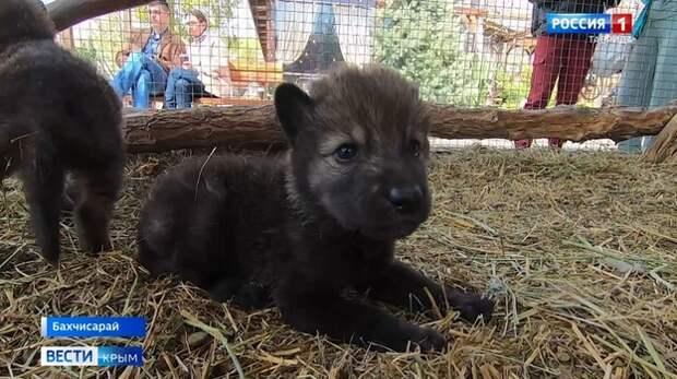 Под двери бахчисарайского зоопарка подкинули волчат