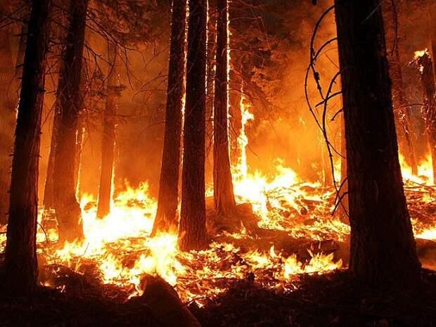 Уже более 20 человек стали жертвами страшных пожаров в США