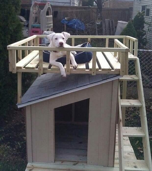 Будка с балконом