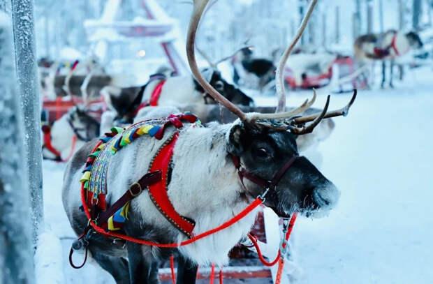 В Лапландии засыпало снегом деревню Санта-Клауса
