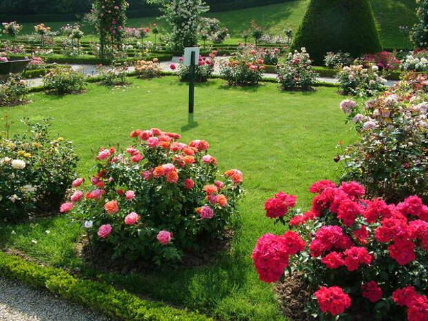 Вряд ли стоит пытаться повторить классический розарий в своем загородном саду, но подсмотреть удачные идеи, безусловно, можно