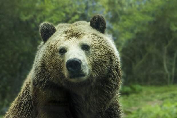 В Армении медведь напал на туристов