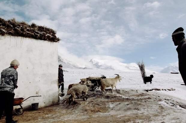 Практически все держат скот - натуральное хозяйство помогает выжить жизнь простых людей, миграция, таджикистан