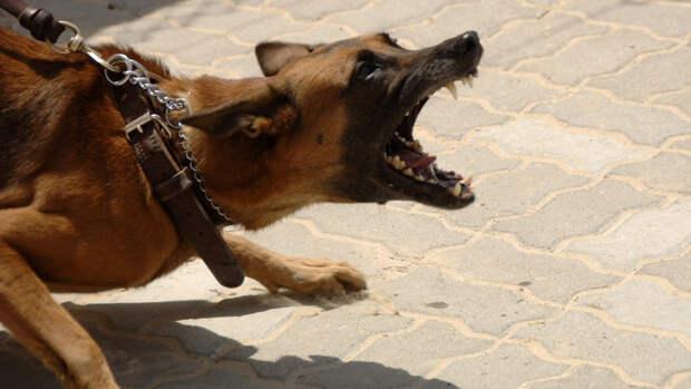 Агрессивная собака напала на 11-летнего ребенка в Крыму