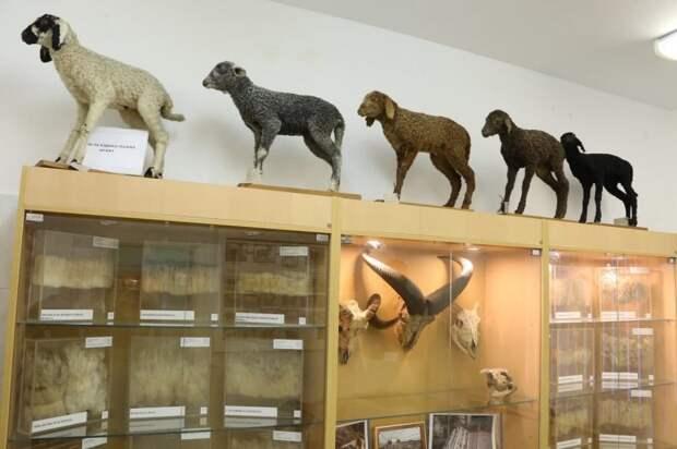 Музей животноводства Тимирязевки получил награду олимпиады «Музеи. Парки. Усадьбы»