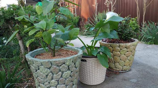 Мастерица делает простые и красивые кашпо для сада