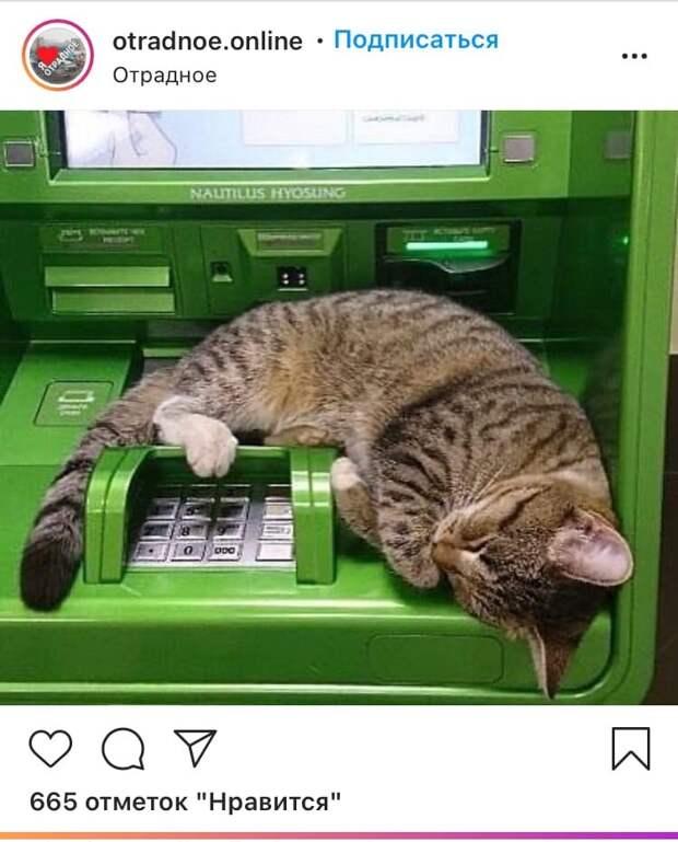 Фото дня: кот уснул на банкомате в Отрадном