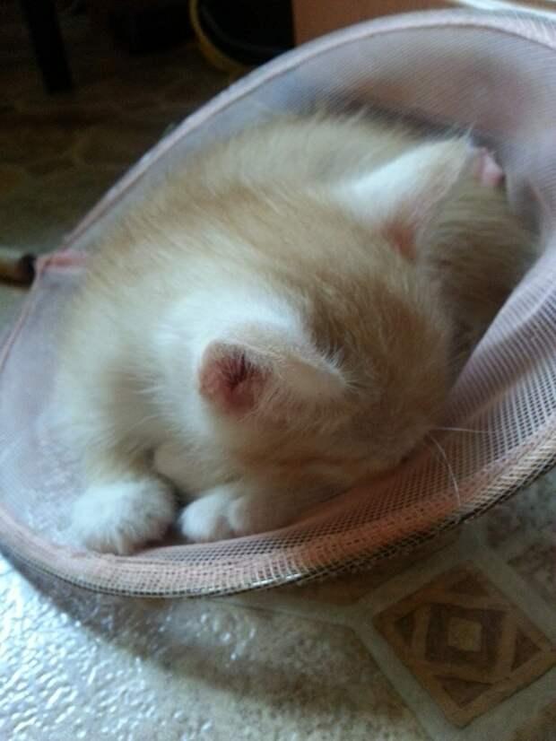 "Записки ветеринара. Кот-""пришелец"", кошко-мать и собака-улыбака."
