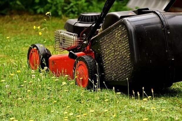 Во дворе дома на Ботанической покосили траву