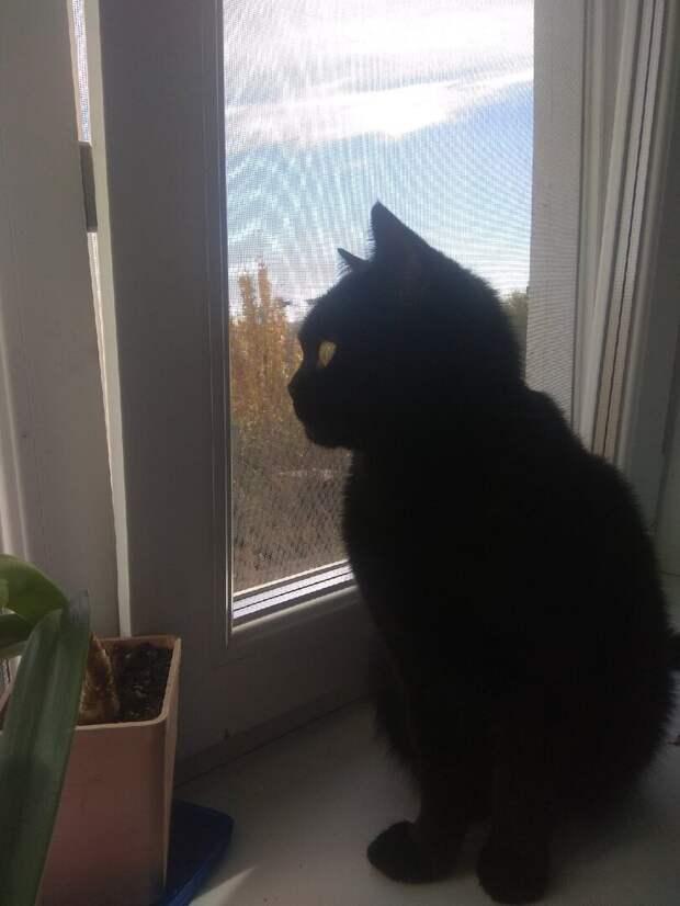 Это не мы выбираем котов, а коты выбирают нас: как меня выбрал котёнок на мой день рождения