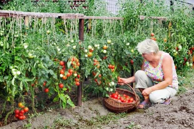 сбор урожая по Лунному календарю 2019