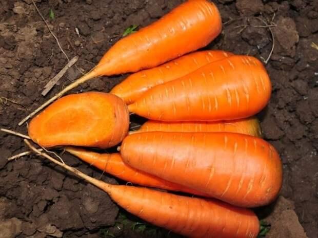 Почему морковь горчит?