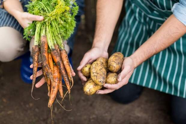 что посадить на месте картофеля