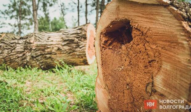 «Не зазеленело»: волгоградцы обвинили чиновников в уничтожении сквера