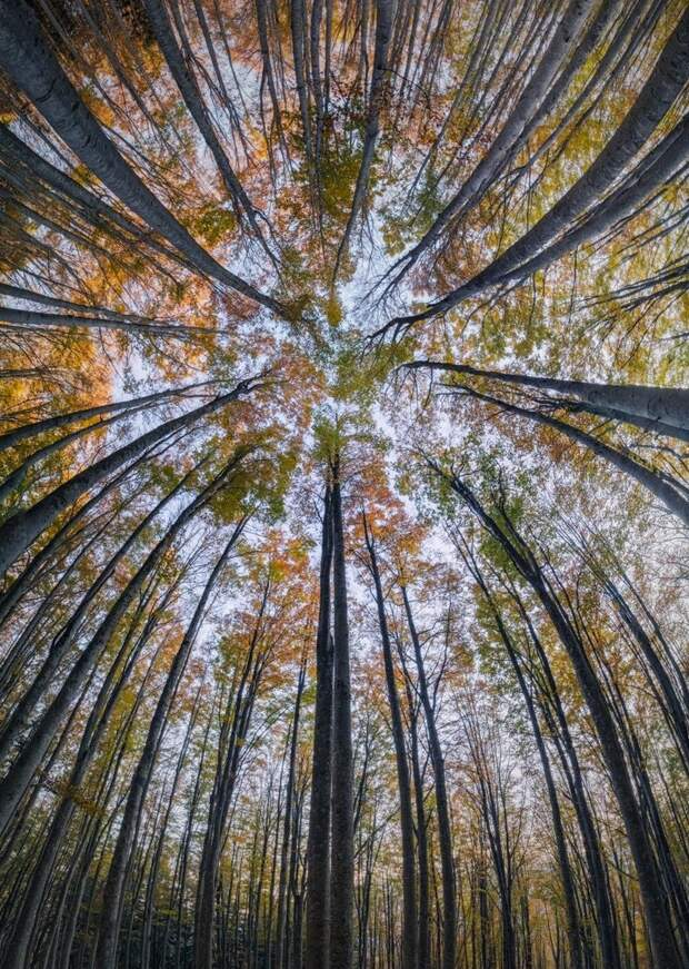 Волшебная красота лесов, которую никто не видит, потому что не смотрит вверх