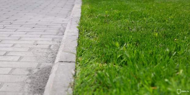 На Шереметьевской вместо цветника высадили газон