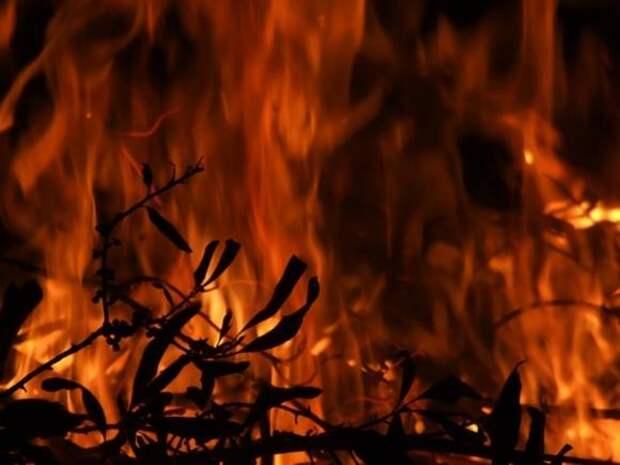 «Море покрылось пеплом»: экстренные службы не справляются с сильнейшим в истории Антальи лесным пожаром (фото)