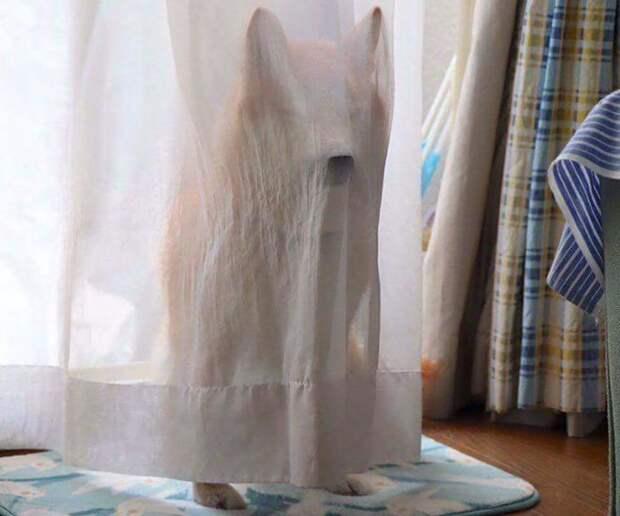Белый призрак домашние животные, животные, мило, очаровательно, собаки, трогательно, шиба ину, щенки