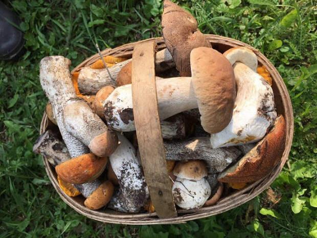 Десять лучших шуток из Twitter о новых правилах сбора грибов и березового сока