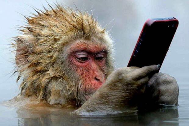 Потное восстание планеты обезьян на планете людей