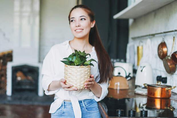 Как подкармливать комнатные растения: лучшие удобрения и правила ухода