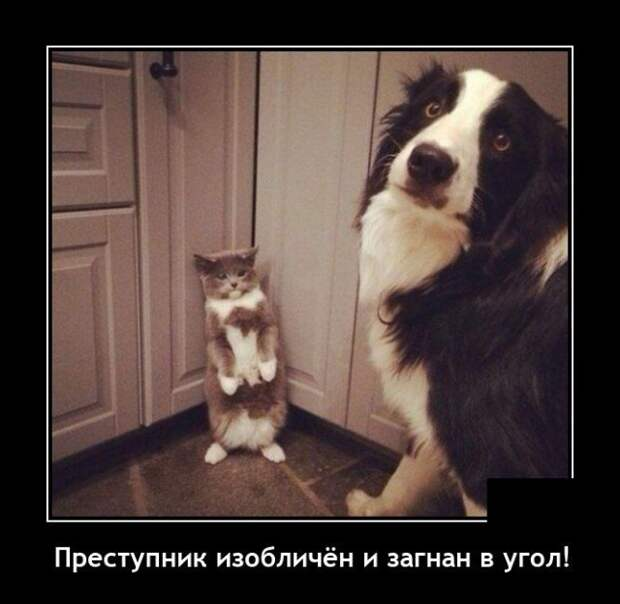 Демотиватор про кота и собаку