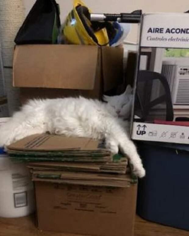 Кот с посылками