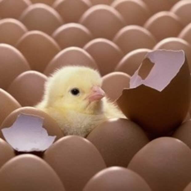 10 великолепных идей использования яичной скорлупы