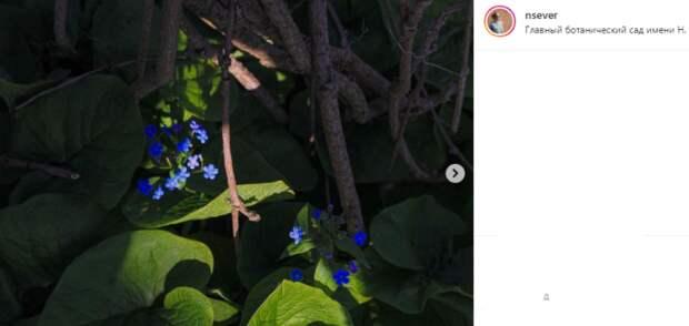 Фото дня: в Ботаническом саду распустились незабудки