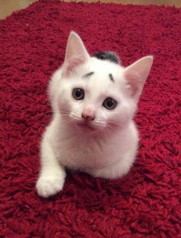 Как тут не накормить.. животные, забавно, коты, кошки, неожиданно, окрас, окрас кошек, фото