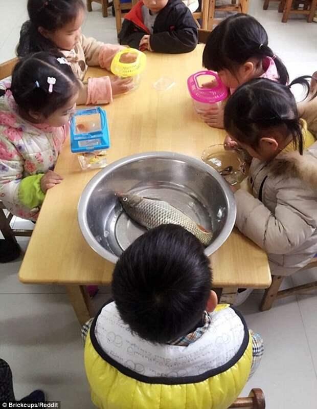 5. Детей попросили принести рыбок в школу  дети, юмор