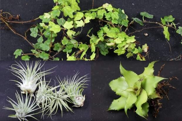 Живое панно вместо цветов и растений. Оригинально, красиво и с минимумом хлопот по уходу