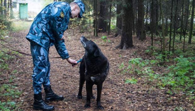 Сотрудники карельского СИЗО-1 вычесали собак в приюте