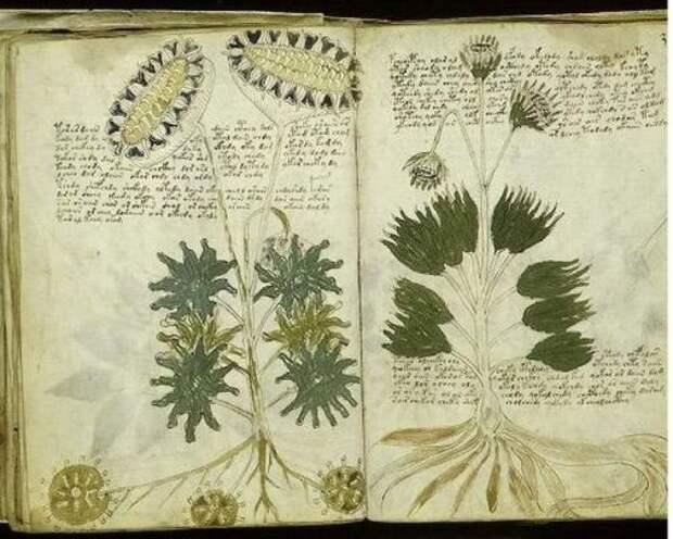 Рукопись Войнича (Италия)