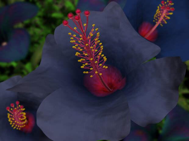 Гибискус - цветок любви. - Культура и Искусство Дизайн